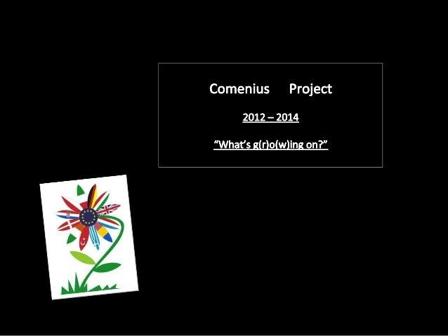 Luzino presentation