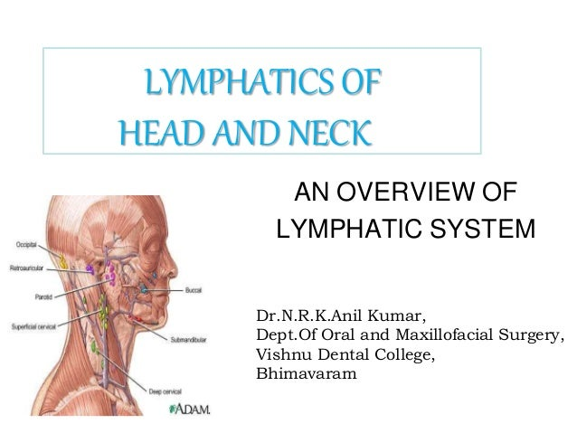 AN OVERVIEW OF LYMPHATIC SYSTEM Dr.N.R.K.Anil Kumar, Dept.Of Oral and Maxillofacial Surgery, Vishnu Dental College, Bhimav...