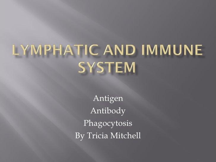 Antigen Antibody Phagocytosis By Tricia Mitchell