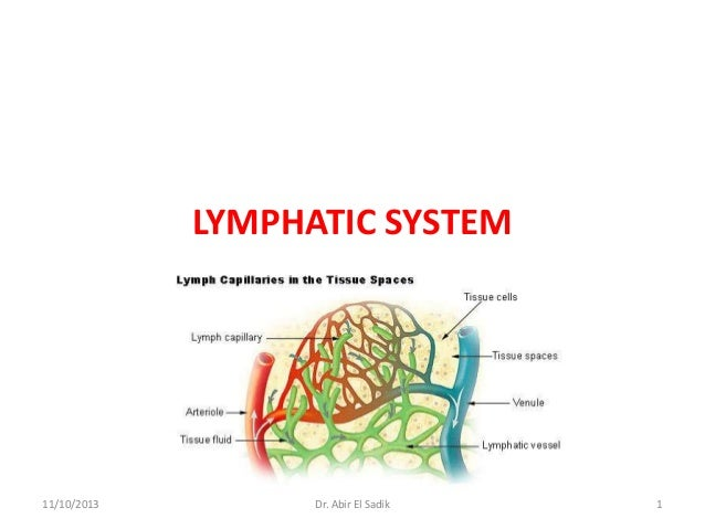 Lymphatic & Endocrine systems - Anatomy