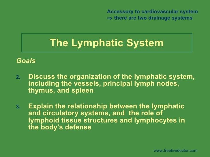 Lymphaticsystem 100311040135-phpapp01