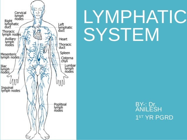 LYMPHATIC SYSTEM BY-: Dr. ANILESH 1ST YR PGRD