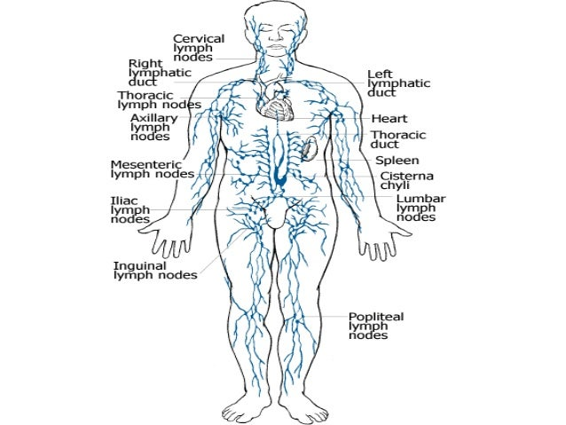 Anatomy of lymphatic system