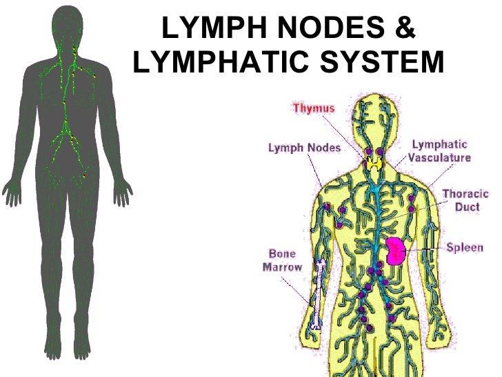 Lymph nodes & lymphatic system