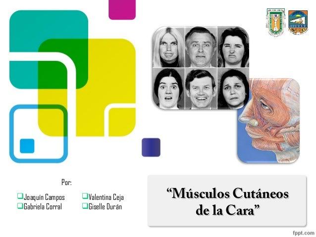 "Por:Joaquín Campos      Valentina Ceja   ""Músculos CutáneosGabriela Corral     Giselle Durán                          ..."