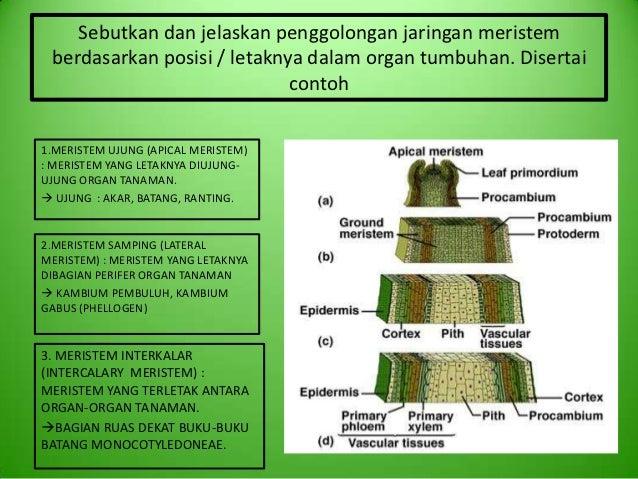 M11 kelompok 7 jaringan tanaman