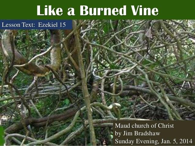 Like a Burned Vine Lesson Text: Ezekiel 15  Maud church of Christ by Jim Bradshaw Sunday Evening, Jan. 5, 2014
