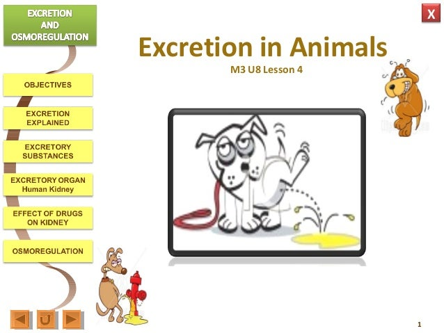 Biology homework help animal excretion