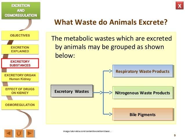 Biological significance of elimination