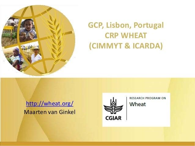 GRM 2013: CGIAR Research Program on wheat -- M van Ginkel