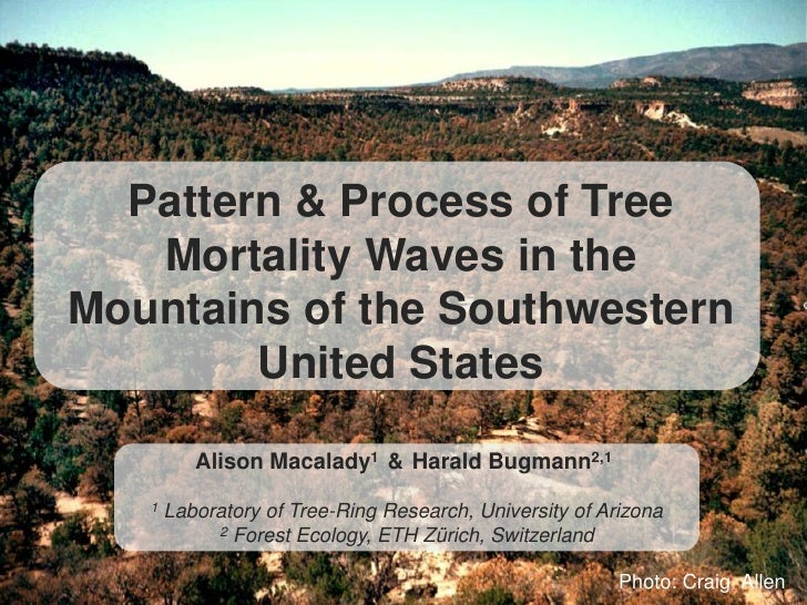 Pattern & Process of Tree   Mortality Waves in theMountains of the Southwestern        United States          Alison Macal...