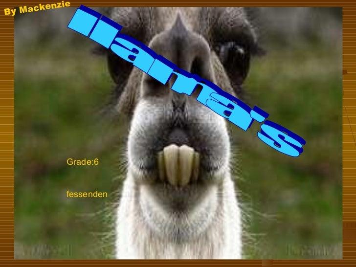 llama's By Mackenzie Grade:6 fessenden