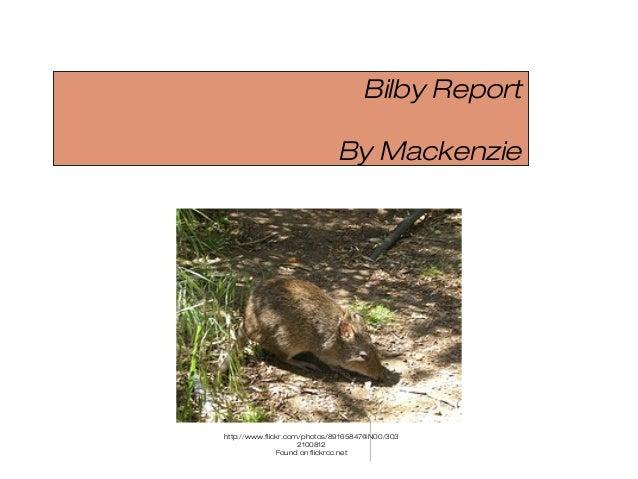 Bilby Report By Mackenzie http://www.flickr.com/photos/89165847@N00/303 2100812 Found on flickrcc.net