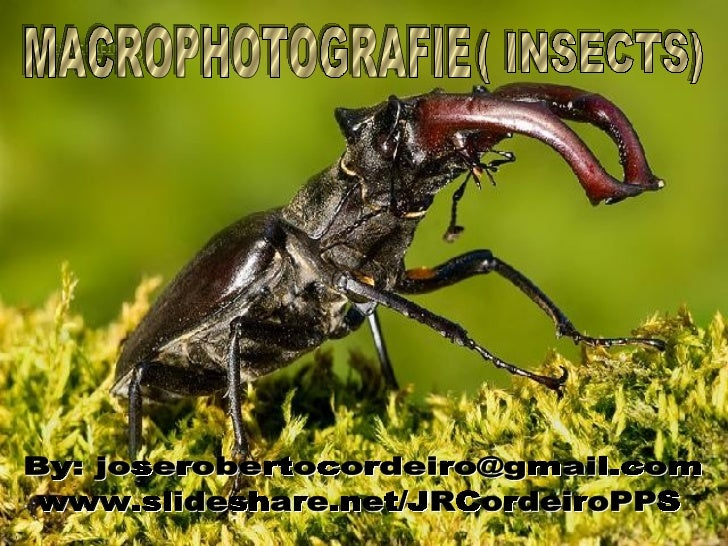 Macrophotografie-Insects