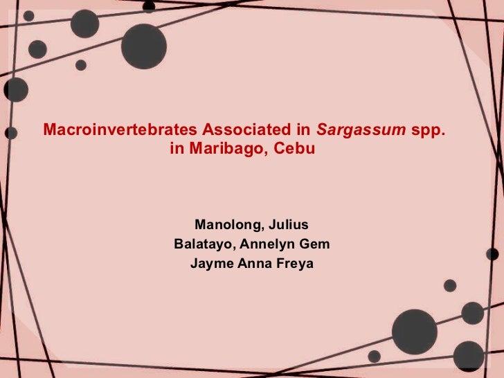 Macroinvertebrates Associated in  Sargassum  spp.    in Maribago, Cebu Manolong, Julius Balatayo, Annelyn Gem Jayme Anna F...