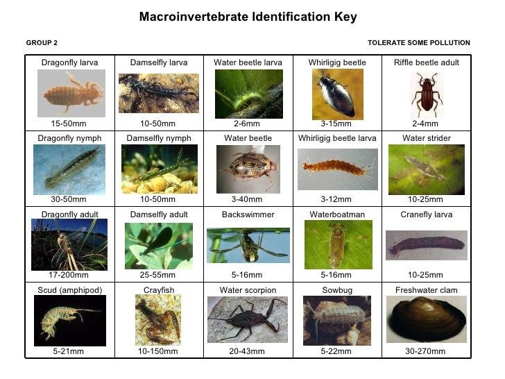 macroinvertebrates eee