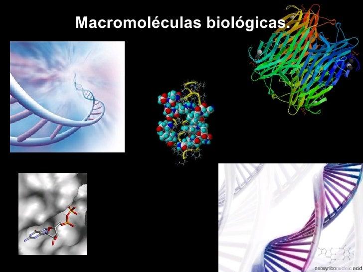 Macromoléculas biológicas.