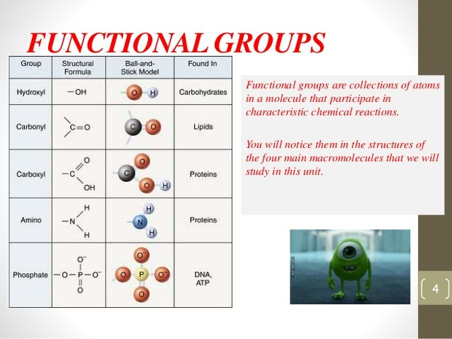 a study on the structure and function of lipids Structure of lipids  the structure of all three types of  and they perform a similar function hopanoids are related lipids produced by some  study material.