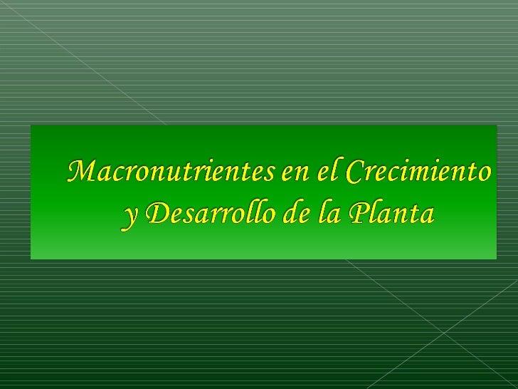    Analizar la importancia de los    macronutrientes      en     el    Crecimiento y Desarrollo de la    planta.