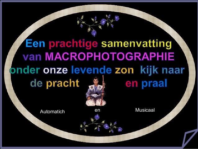 美丽的微距摄影  微距摄影  Automatich  en  Musicaal