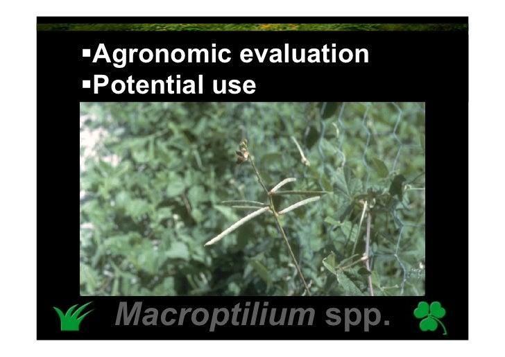 Agronomic evaluation Potential use      Macroptilium spp.