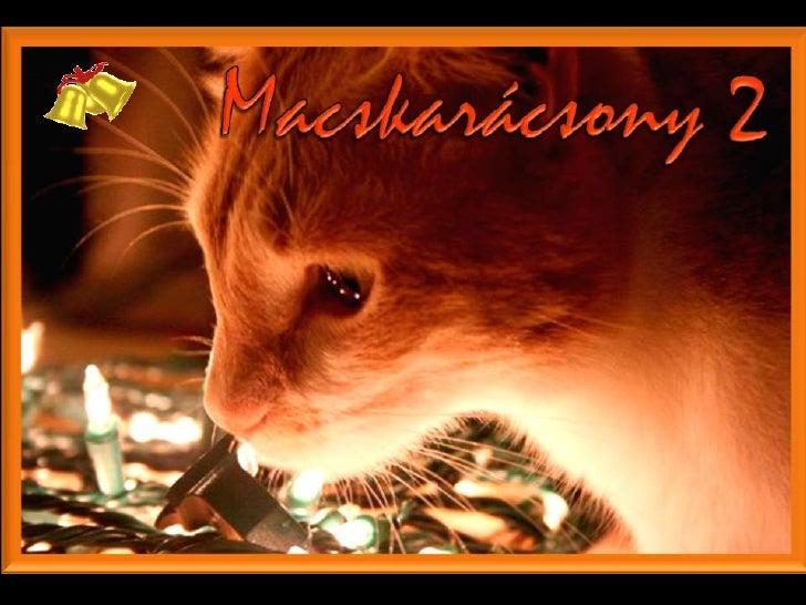 MACSKARÁCSONY 2  (CAT CHRISTMAS 2)