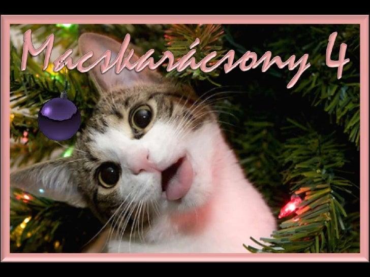 MACSKARÁCSONY 4  (CAT CHRISTMAS 4)
