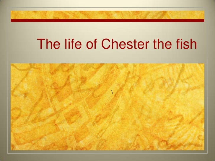 The life of Chester the fish<br /><br />