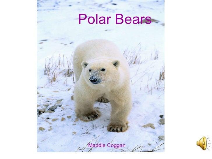 Maddie and the polar bear