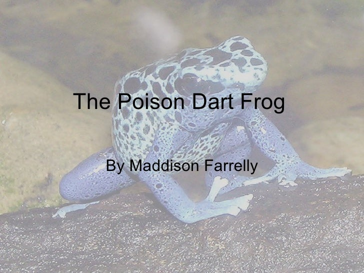The Poison Dart Frog By Maddison Farrelly