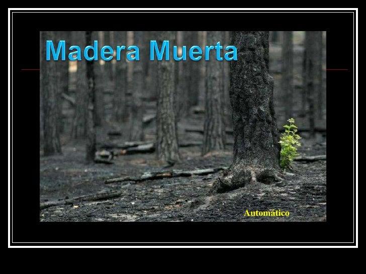Madera Muerta<br />Automático<br />