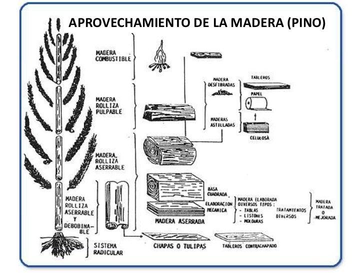 La madera como material de construcci n - Maderas del pino ...