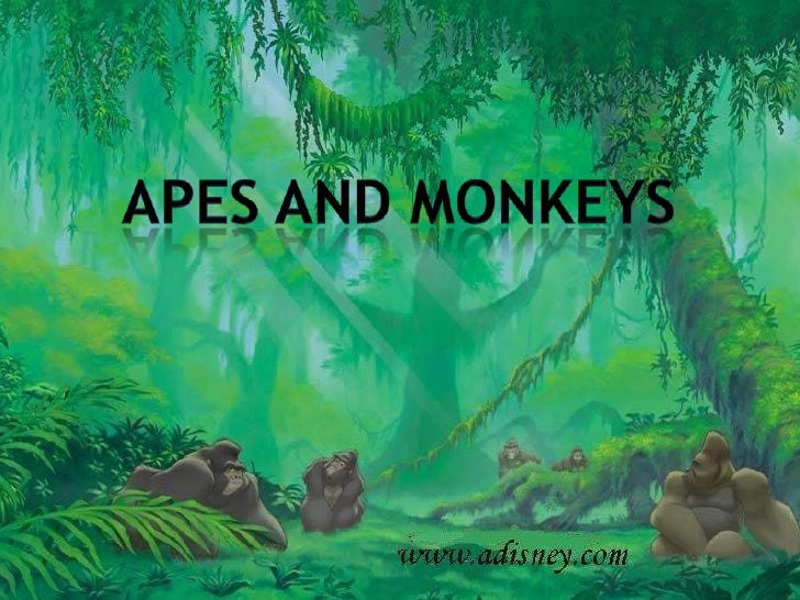 Apes and monkeys<br />