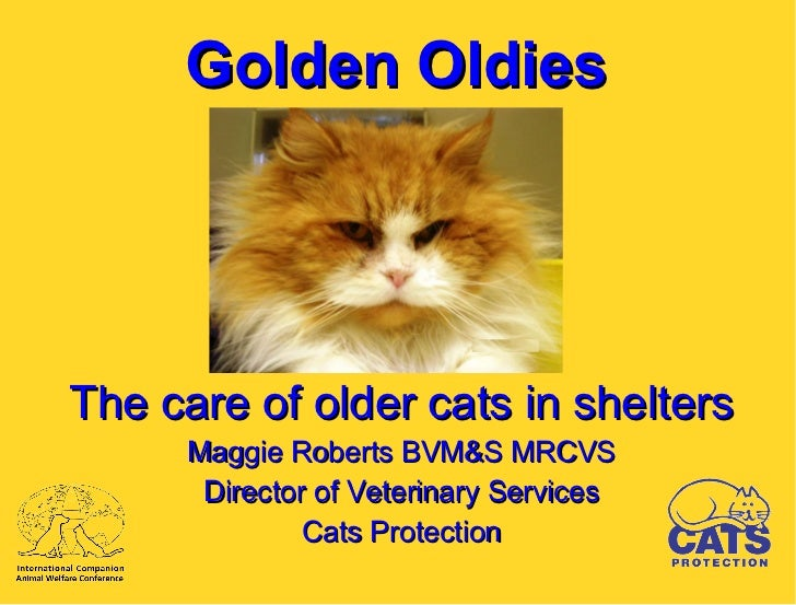 ICAWC 2011: Maggie Roberts - Caring for Older Cats
