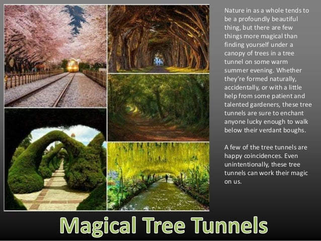 Magical Tree Tunnels