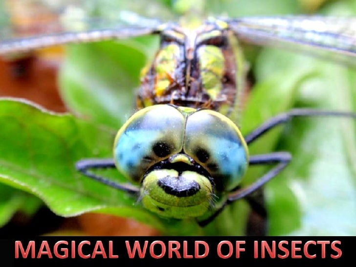 MAGICAL WORLD OF INSECTS<br />