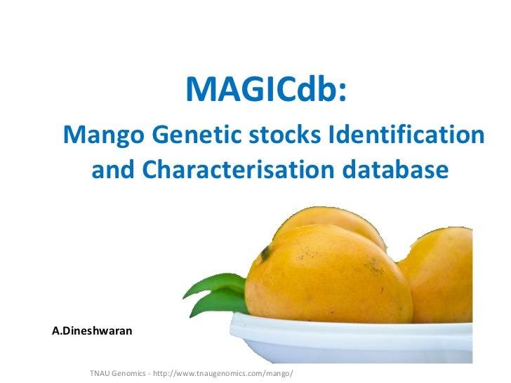 MAGICdb: Mango Genetic stocks Identification  and Characterisation databaseA.Dineshwaran      TNAU Genomics - http://www.t...