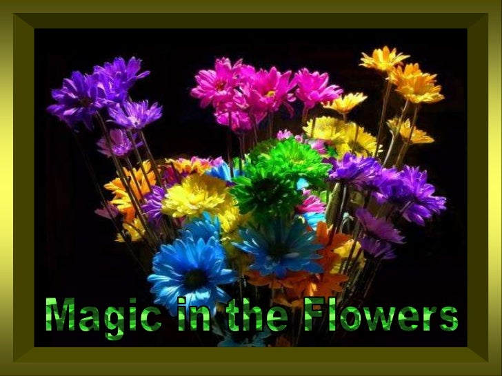 Magic in theFlowers<br />