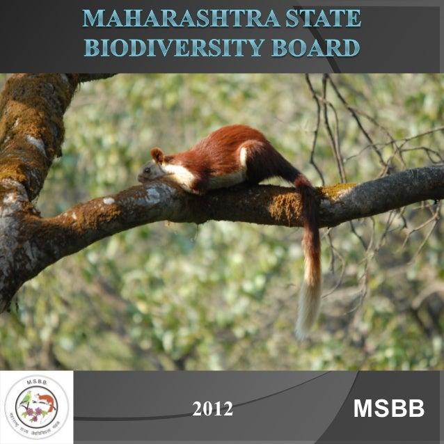 2012   MSBB