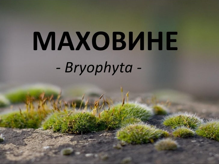 МАХОВИНЕ - Bryophyta -