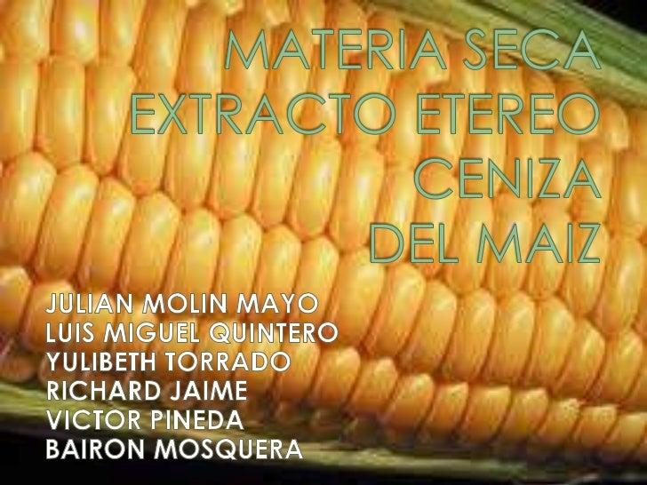  El  maíz es un cereal, fue y es  considerado básicamente un grano  forrajero.    Sin     embargo      sus  propiedades t...