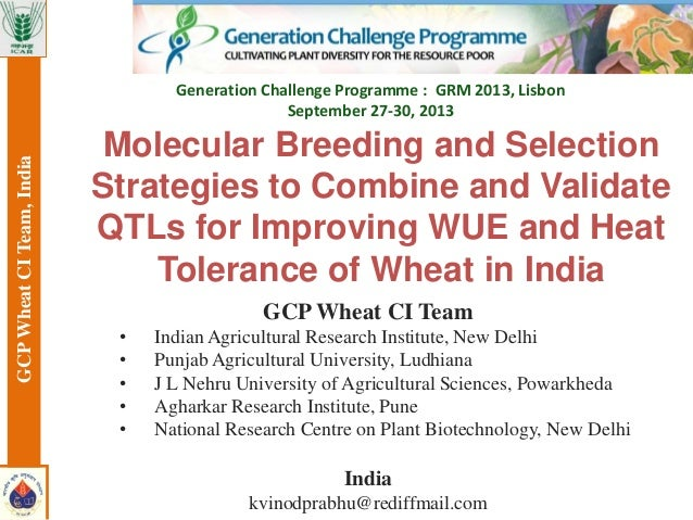 GCP Wheat CI Team • Indian Agricultural Research Institute, New Delhi • Punjab Agricultural University, Ludhiana • J L Neh...