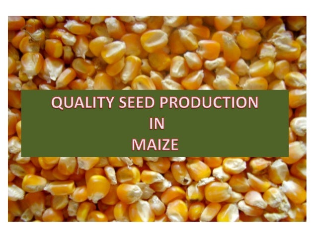 seed corn industry essay Although each stage of development is critical for proper corn production we will plant physiology critical stages in the life if seed planted to deep, or.