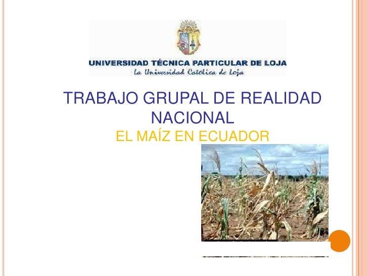 TRABAJO GRUPAL DE REALIDAD NACIONAL<br />EL MAÍZ EN ECUADOR<br />