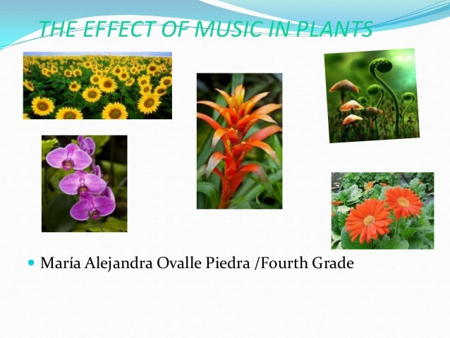 THE EFFECT OF MUSIC IN PLANTS   María Alejandra Ovalle Piedra /Fourth Grade