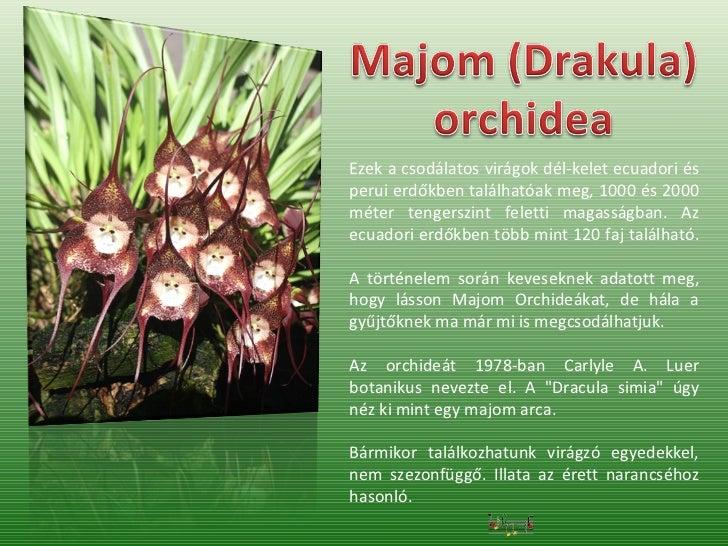 Ezek a csodálatos virágok dél-kelet ecuadori ésperui erdőkben találhatóak meg, 1000 és 2000méter tengerszint feletti magas...