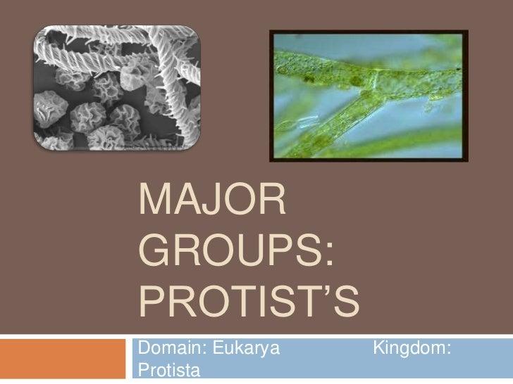 Major groups  protists