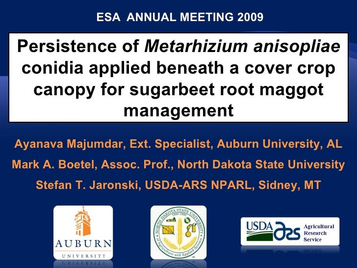 ESA  ANNUAL MEETING 2009 Persistence of  Metarhizium anisopliae  conidia applied beneath a cover crop canopy for sugarbeet...