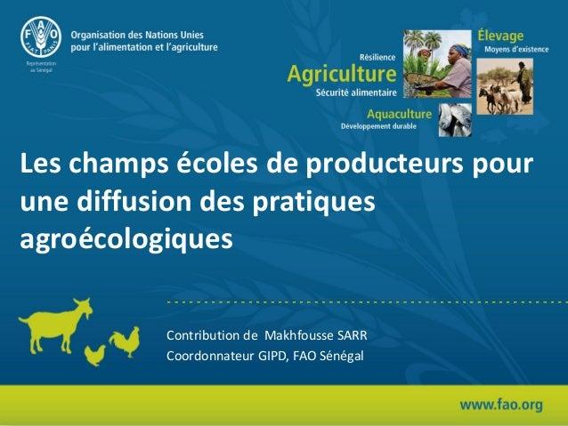 Les champs écoles de producteurs pour une diffusion des pratiques agroécologiques Contribution de Makhfousse SARR Coordonn...