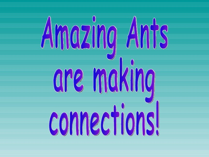 Amazing Ants  are making  connections!